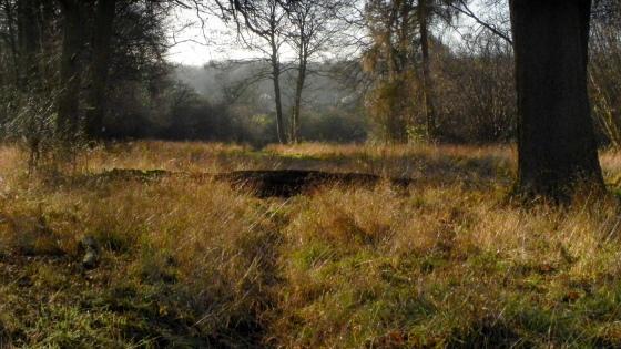 Hatfield Forest-1