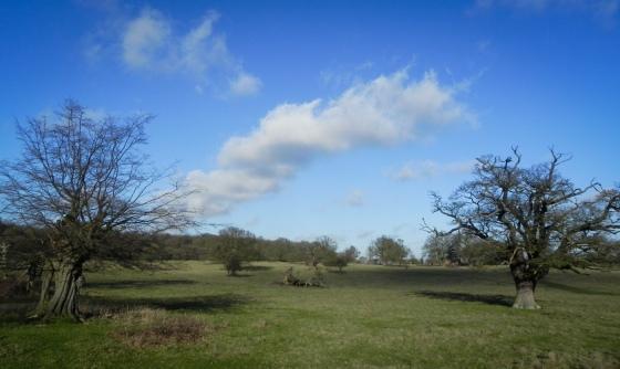 Hatfield Forest-2