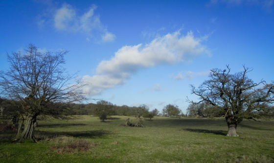 Hatfield Forest-2