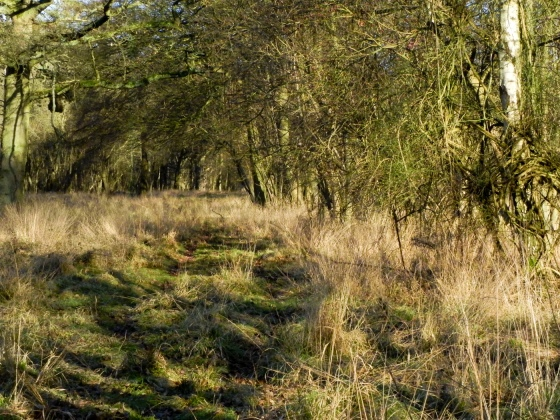 Hatfield Forest-3
