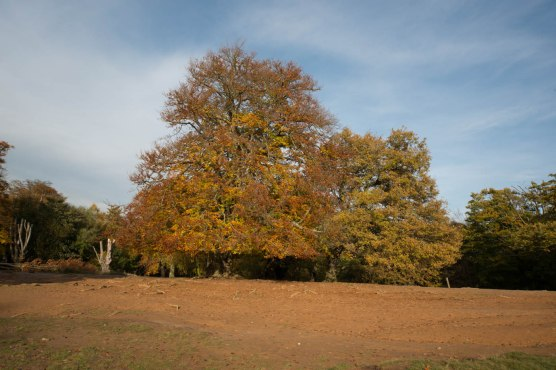 Epping Forest Colour 7