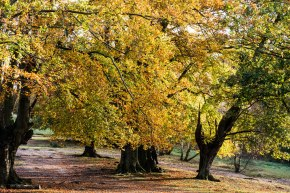 Epping Forest Colour 2
