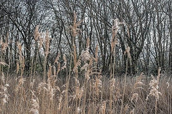 Textured Grass