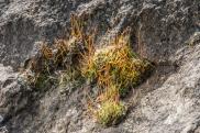 lichen-3