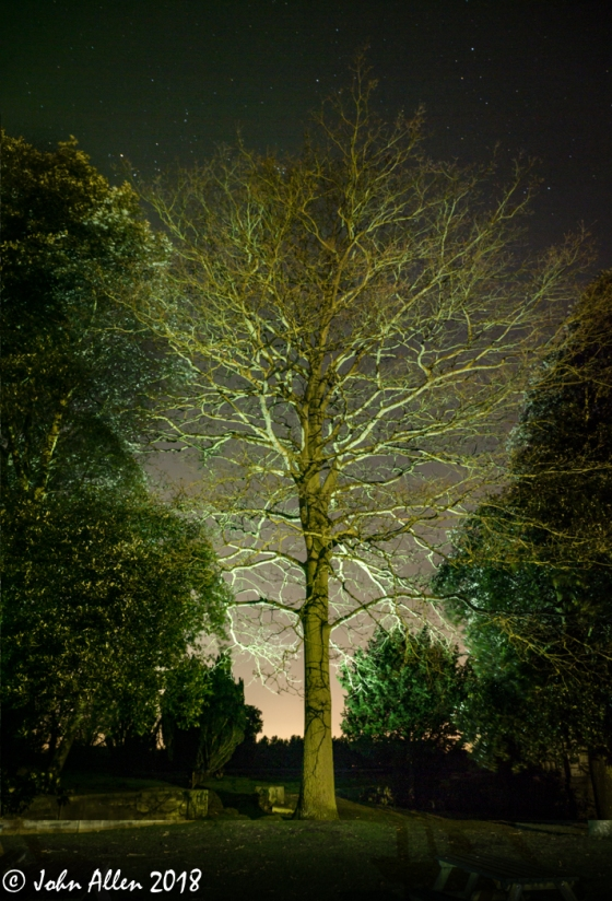 lit tree by john allen