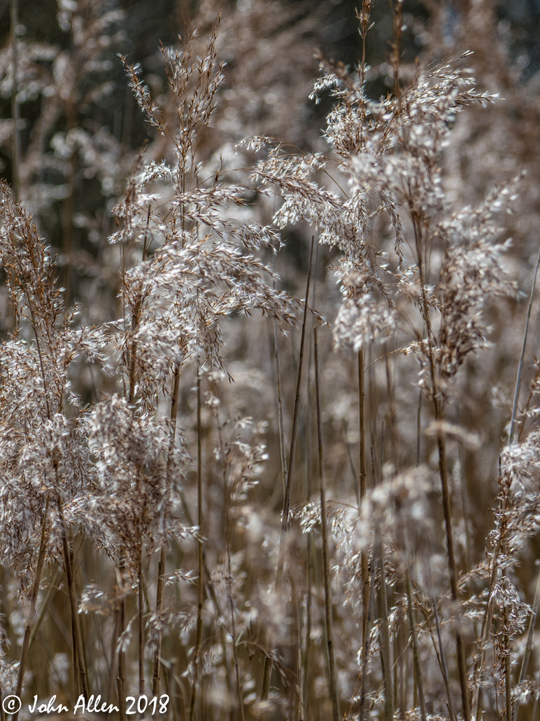 BACK LIT GRASS by John Allen