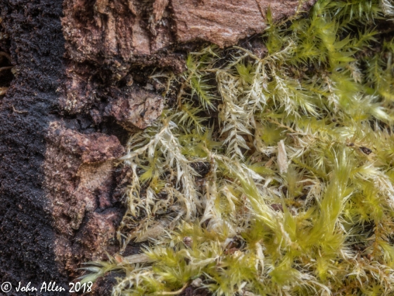 LICHEN ON OLD WOOD by John Allen