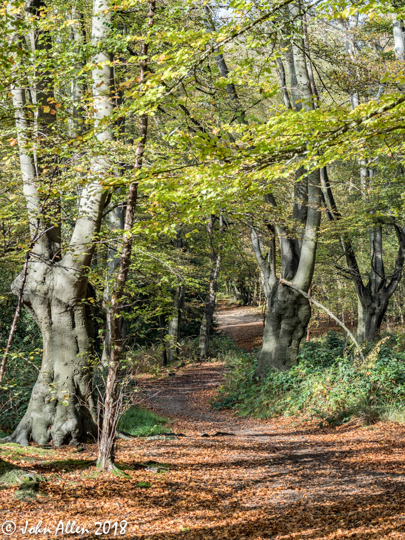 EPPING FOREST WALK BY JOHN ALLEN-1