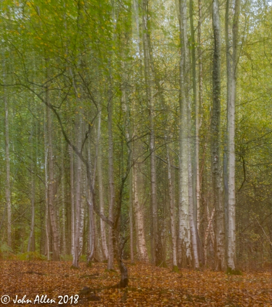 EPPING FOREST WALK BY JOHN ALLEN-6