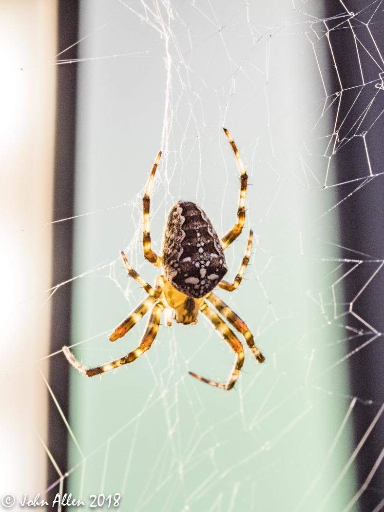 SPIDER by John Allen-2
