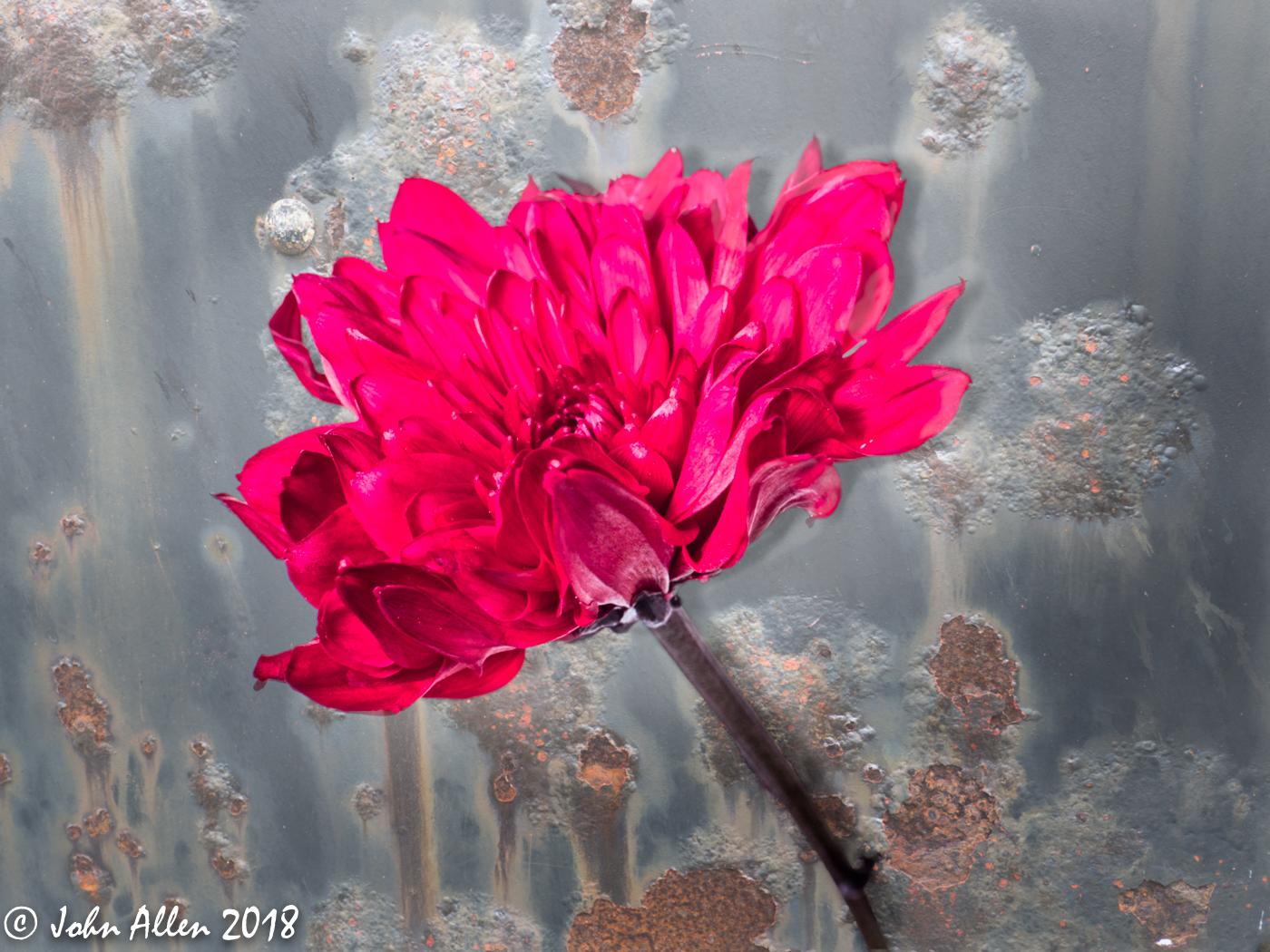 Flower by John Allen-1