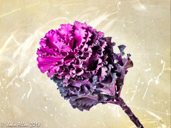 Flower by John Allen-2