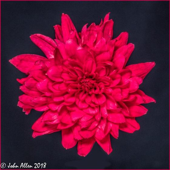 Flower by John Allen-3