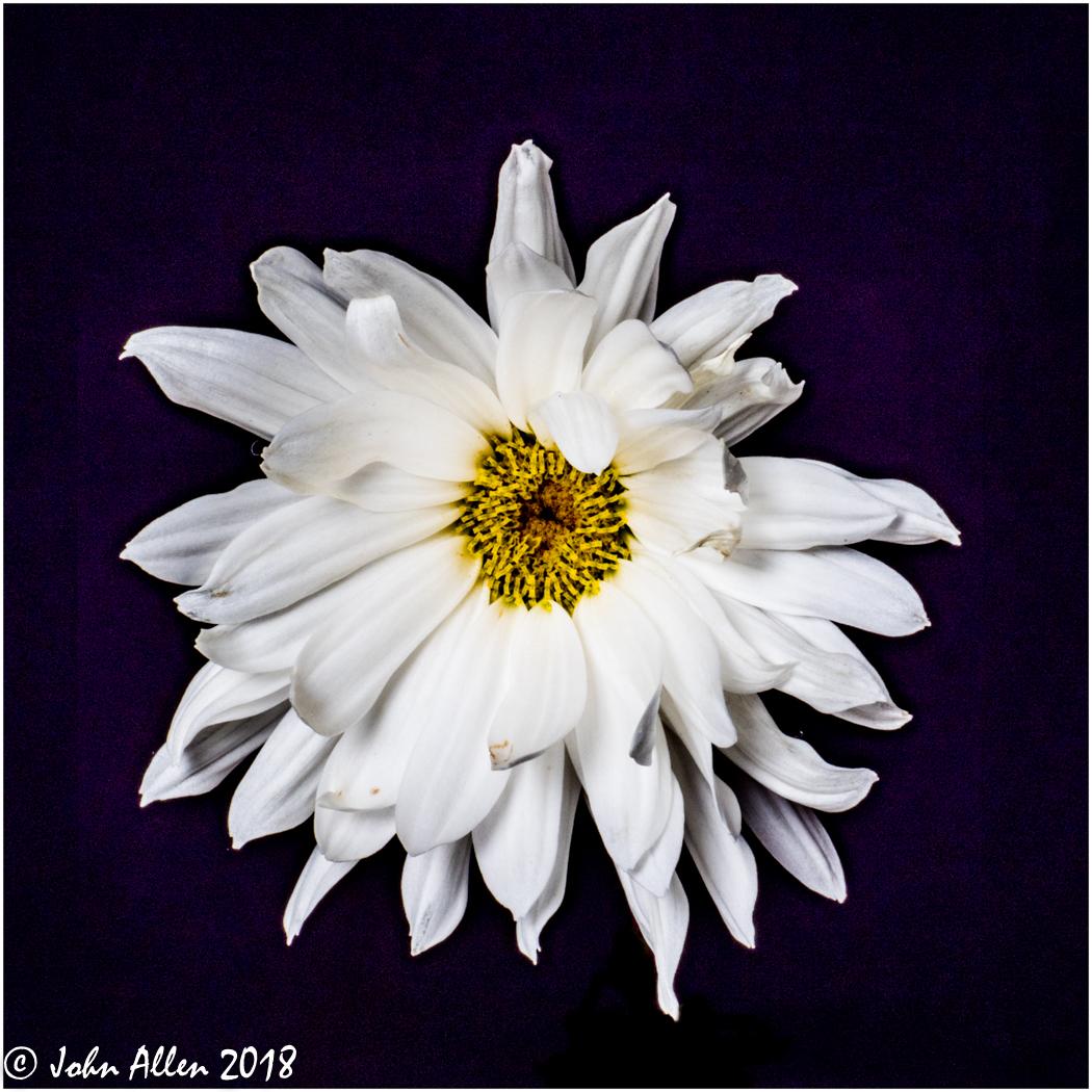 Flower by John Allen-4